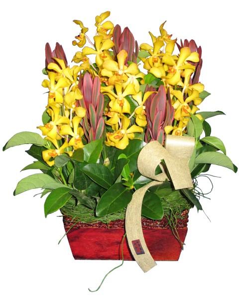 LILLIAN - Flowers Sydn...